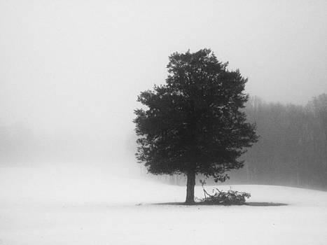 Eternal Forest by Matthew Grice
