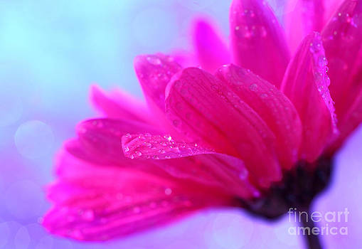 Ethereal Daisy by Pattie Calfy