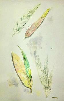Eucaliptus Dreams by Ally Keller