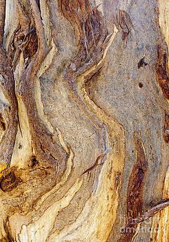 Steven Ralser - Eucalyptus bark