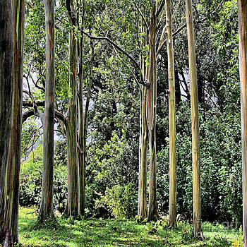 Eucalyptus by DJ Florek