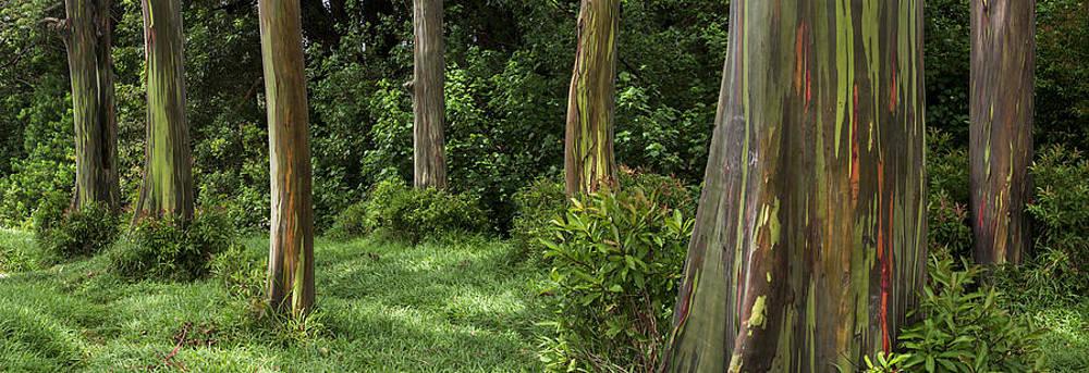 Eucalyptus Dream by Brad Scott