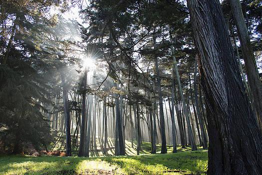 Eucalyptus in Fog by Gej Jones