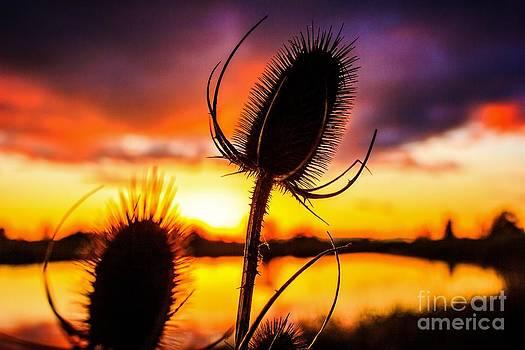 Eugene. Oregon Wetland Sunset 2 by Michael Cross