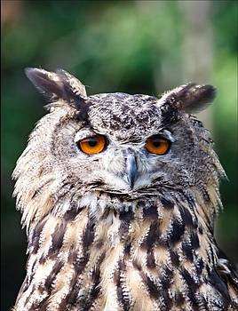 Eurasian Eagle Owl by Jim Koniar