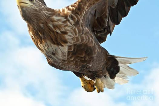 Heiko Koehrer-Wagner - European Flying Sea Eagle 2