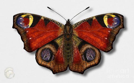 European Peacock - Inachis io - Paon du jour - La mariposa pavo real - Neitoperhonen - Dagpauwoog by Urft Valley Art