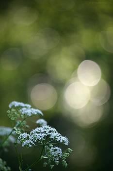 Evening beauty by Tiina M Niskanen
