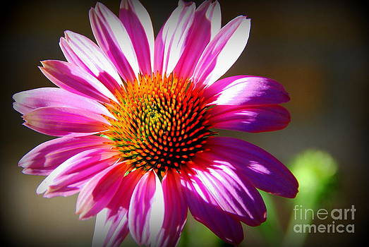 Evening Coneflower by Christy Phillips