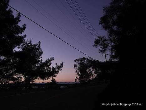 Evening Drive by Natalie Rogers