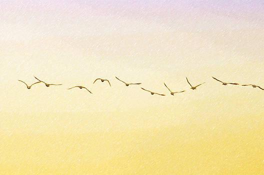 Evening Flight by Ramona Murdock