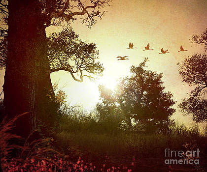 Bedros Awak - Evening Flying Geese
