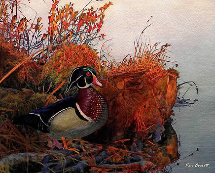 Evening Light Wood Duck by Ken Everett