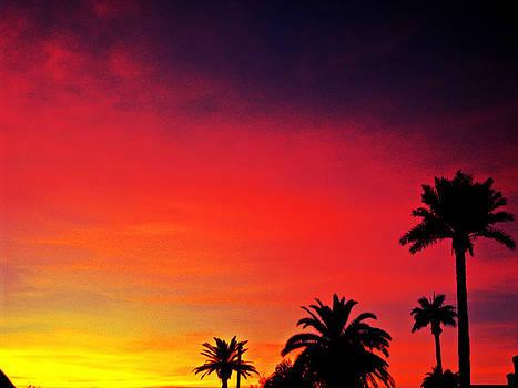 Kevin D Davis - Evening Paradise II