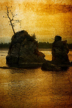 Evening Roost by Elaine Goss