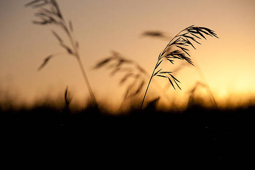Evening Silhouette by Bob Mintie