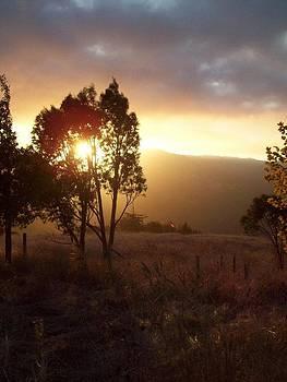Evening Sun in Oaks by Misty Ann Brewer