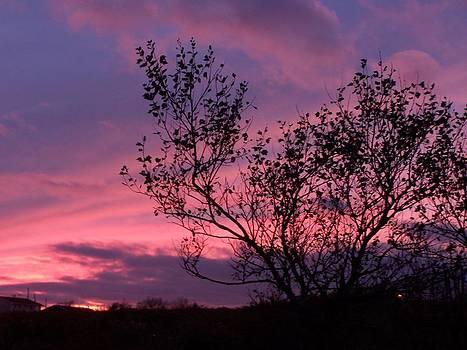 Evening Sunset by Susan Turner Soulis