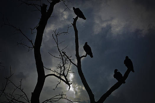 Evening Vultures by Bradley R Youngberg