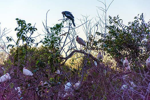 Manuel Lopez - Everglades birds