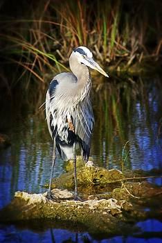 Marty Koch - Everglades Blue