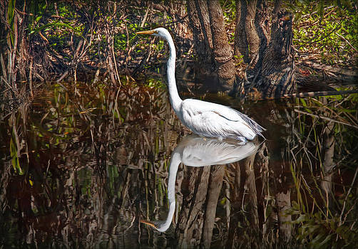 Everglades by Hanny Heim