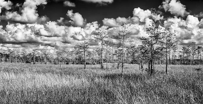 Thomas Schreiter - Everglades
