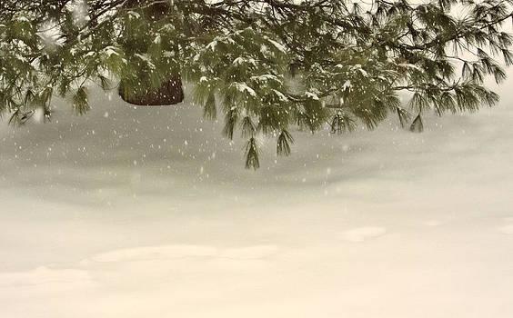 Evergreen in a Snowfall by Nancy De Flon