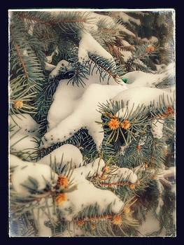 Evergreen Winter by Dustin Soph