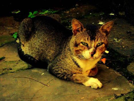 Evil Cat by Salman Ravish