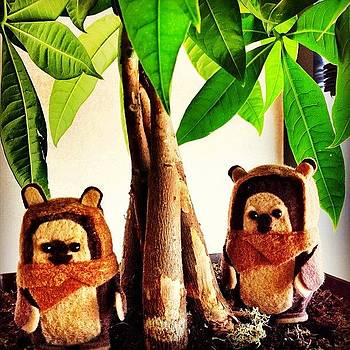 #ewoks #starwars #critters #awesome by Amanda Max
