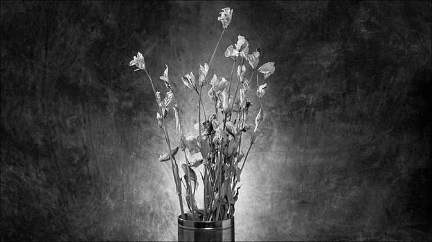 Exeunt #4 by Morocco Flowers Images