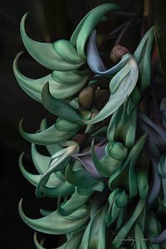 Exotic Jade Vine by Karen Casey-Smith