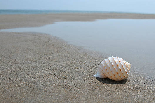 Exotic seashell on the sand and calm ocean on background by Anton Oparin
