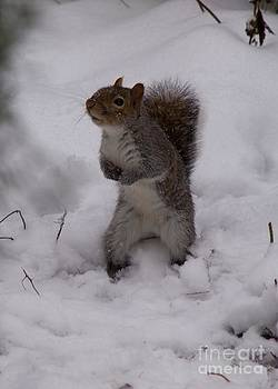 Expectant Squirrel in the Snow by Elizabeth Debenham
