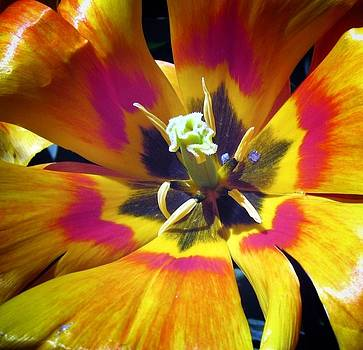 Explosion by Mary Ann Southern