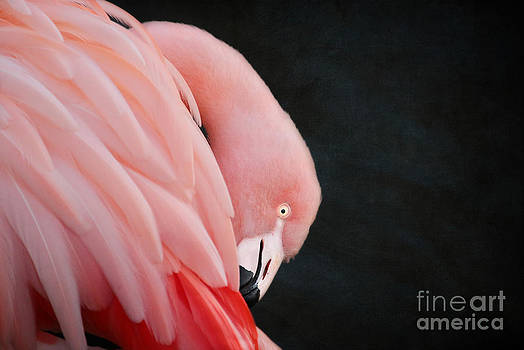 Exquisite Pink Flamingo #5 by Lisa Cockrell