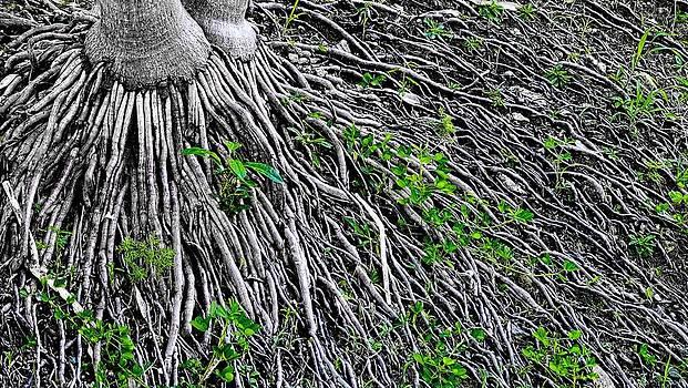 Sandra Pena de Ortiz - Extended Roots