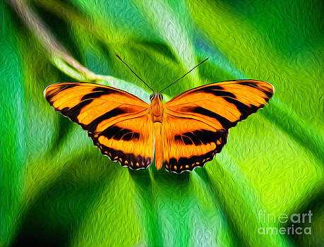 Extended wings of the Banded Orange Tiger Heliconian Butterfly  by Kenneth Montgomery