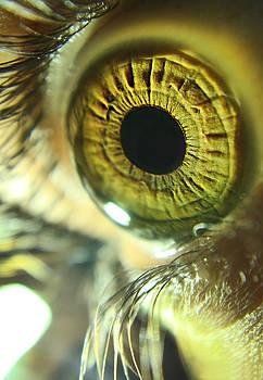 Eye macro by Victoria  Kostova