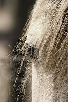 Eye of Beauty by Heather Palmer