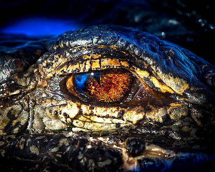 Eye of the Apex by Mark Andrew Thomas