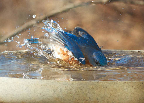Eye of the Bluebird by Diane Porter
