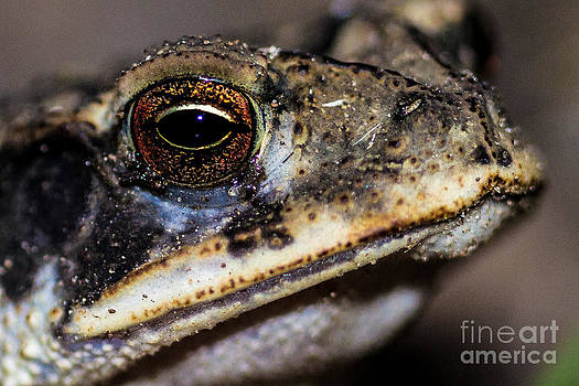 Eye of the Frog by Michelle Burkhardt