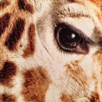 Eye of the Giraffe by Patricia Januszkiewicz