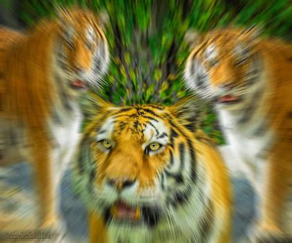 LeeAnn McLaneGoetz McLaneGoetzStudioLLCcom - Eye of the Tiger