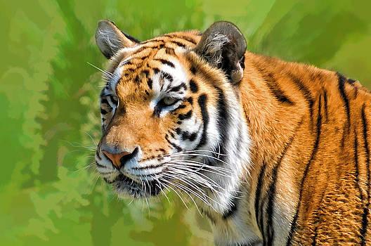 Eye of The Tiger by Liz Mackney