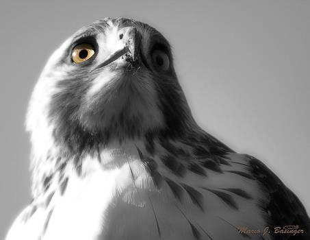 Eye on you by Mario Basinger