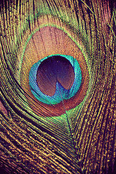 Peacock feather by Nastasia Cook