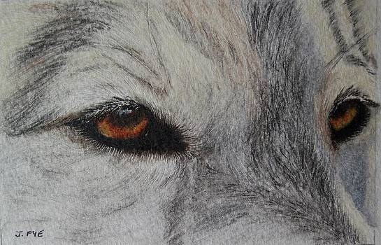 Eyes of the Wolf by Joan Pye